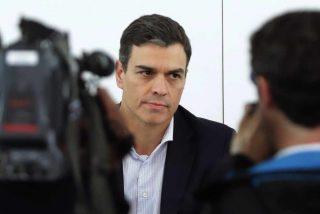 """Una psicóloga descuartiza en directo en TV a Pedro Sánchez: """"Psicópata, mentiroso, peligroso, amoral..."""""""