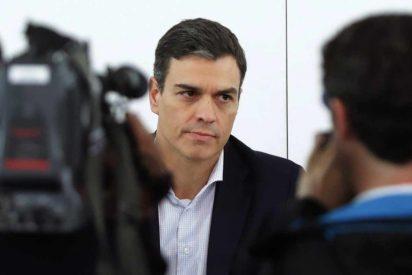 Una psicóloga descuartiza en directo en TV a Pedro Sánchez: