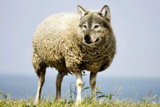 Chiste: el de la oveja que quería marcharse de la Venezuela chavista