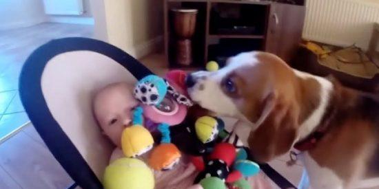 El perro roba un juguete a la bebé y al verla llorar, compungido por la culpa, devuelve la 'mercancía'