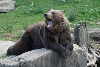 El borracho peleón intenta ahogar a la osa del zoológico