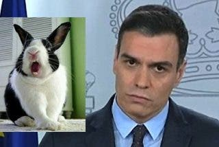 El Gobierno Sánchez está paralizado como un conejo, deslumbrado por los faros del desastre económico