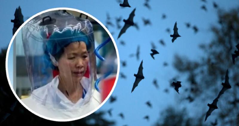 """Shi Zhengli, subdirectora del Instituto de Virología de Wuhan: """"El coronavirus es solo la punta del iceberg"""""""