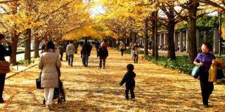 Japón: Lugares imprescindibles que visitar en Tokio durante el otoño