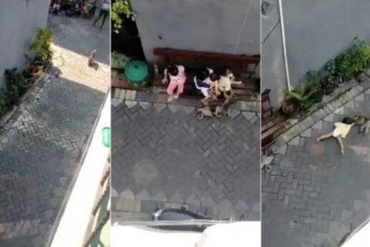 Lo que nos faltaba: un mono en moto intenta secuestrar a una niña