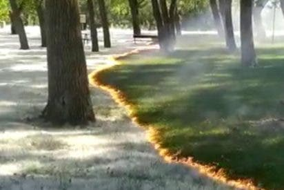 El sorprendente incendio de pelusas de los chopos en el parque del Cidacos de Calahorra