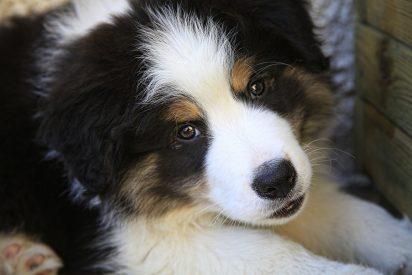 Una familia acampa 27 horas en una perrera para poder adoptar a un peculiar cachorro que se hizo viral en las redes