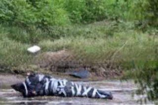 Los cárteles mexicanos y los 'cuerpos encintados': Qué hay detrás del espeluznante método narco de despedazar cadáveres