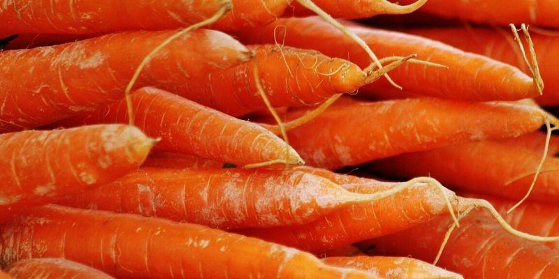 Zanahoria: el mejor aliado para los problemas intestinales