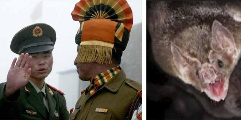 El letal virus Nipah: una noticia fake que afecta a India, justo en medio de su conflicto armado con China