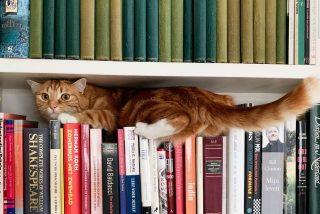 Ultimo reto viral: ¿Dónde está el gato?