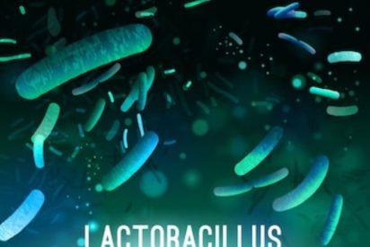 ¿Conoces las propiedades del acidophilus? 👈