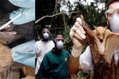Coronavirus:Los científicos advierten que esta no es la última pandemia y que la invasión del hombre en el mundo natural acelera el proceso