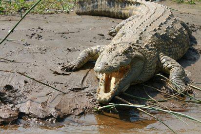 Rastrean a un peligroso cocodrilo de al menos 2 metros en Valladolid