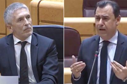 """Maíllo desencaja a Marlaska en el Senado: """"¡Me mintió a mí y a todos los españoles, coño!"""""""