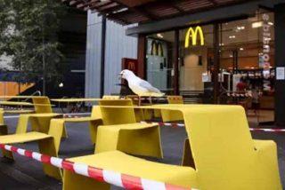 Detienen a un hombre por morder a la gaviota que intentó robar su comida en un McDonald's