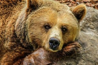La presumida se acerca al oso a hacerse un selfie y la bestia casi se la come