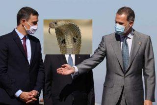 El socialista Pedro Sánchez le hace la 'cobra' al Rey Felipe VI