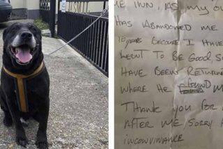 """Deja tirado al perro en la misma calle donde lo rescató 10 años antes: """"No ha aprendido a ser bueno"""""""