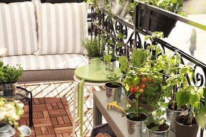 Los cinco secretos para que las plantas de la terraza o balcón no mueran en el verano
