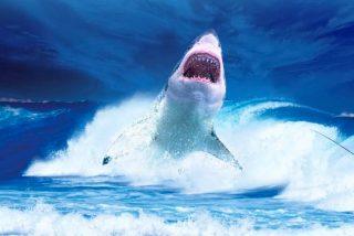 El dramático instante en que un tiburón blanco ataca 'estratégicamente' a una ballena y la empuja herida hacia las profundidades