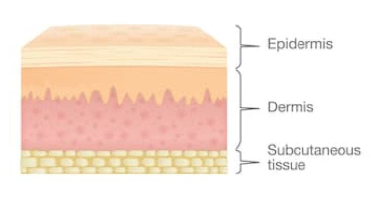 capas piel