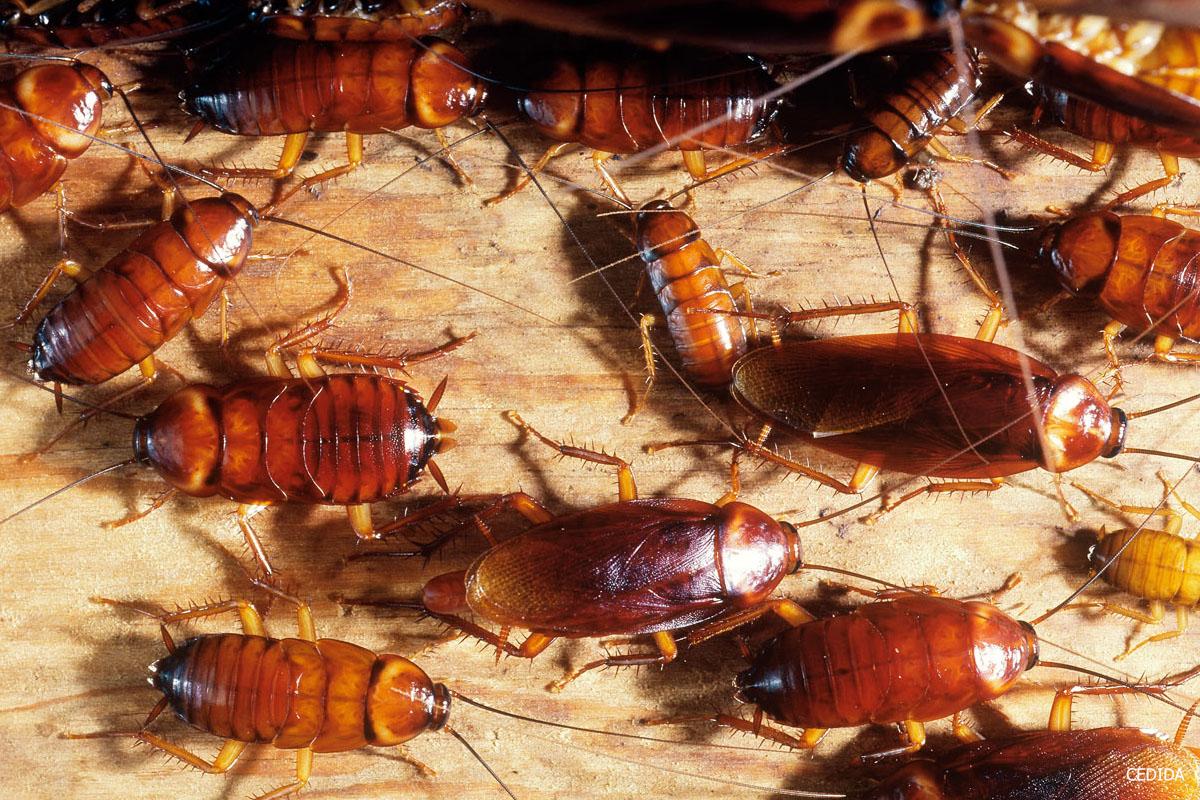 Envía cientos de cucarachas y gusanos vivos en sobres a Canarias