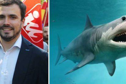 """Recital de zascas al ministro Garzón por tuitear muy preocupado por el """"drama"""" de los tiburones con la que está cayendo en España"""