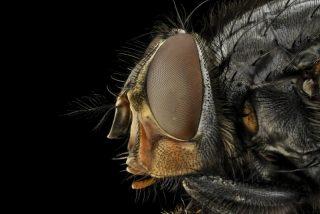 Madrid, bajo la amenaza de una plaga de mosca negra que muerde y causa problemas