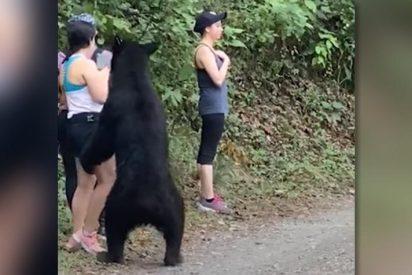 ¿Te harías un selfie en pleno 'ataque' de un oso negro? Esta chica no perdió la ocasión y arrasa en la Red