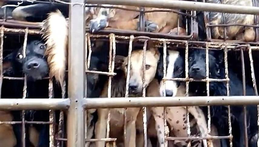 ¿Corea del Norte ante una crisis alimentaria?:Kim Jong-un compra perros para abastecer a los restaurantes de Pyongyang