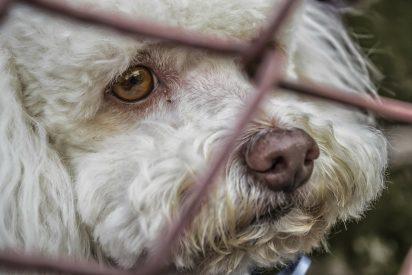 El abandono animal en España se dispara un 25%: muchas mascotas fueron compradas en internet durante el confinamiento