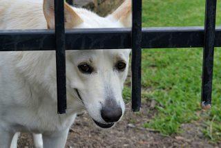 ¡Perros cazafantasmas! Cinco perros que advirtieron la presencia paranormal a sus dueños