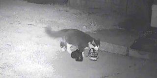 El dueño de un gato ladrón de zapatos crea un grupo de Facebook para enmendar los 'delitos'