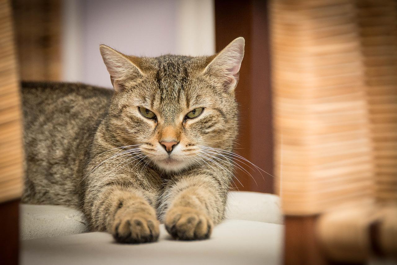 La cámara capta el momento exacto en el que un gato aterriza sobre la cabeza de un chino y lo deja K.O. y lo deja inconsciente