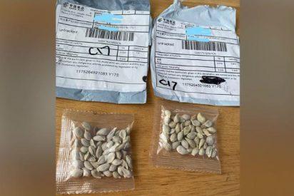 Qué hay detrás de los misteriosos paquetes con semillas chinas que llegan a tu casa sin previo aviso