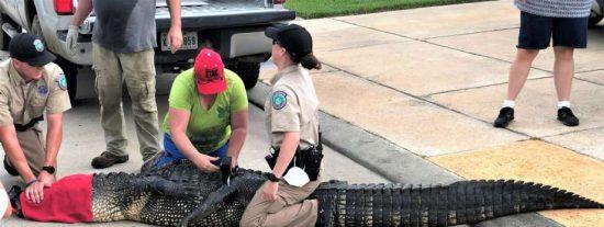 Un padre se enfrenta a un caimán de 3,5 metros para salvar a su hija de 4 años