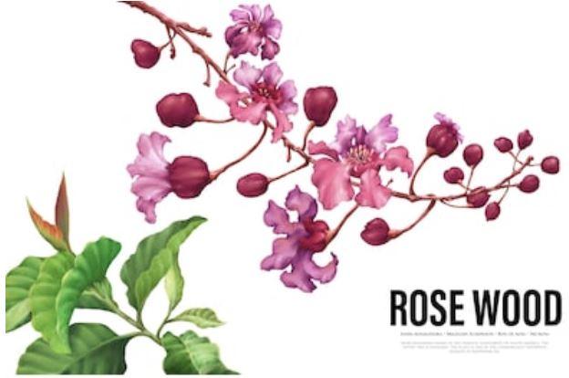 palo de rosa propiedades