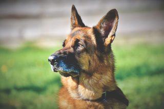 Los alemanes están obligados por ley, a partir de ahora, a pasear a su perro dos veces al día
