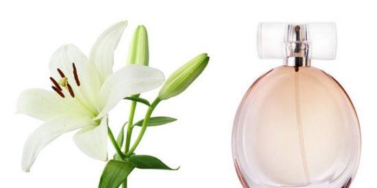Perfumes con olor a lirio más vendidos en Amazon