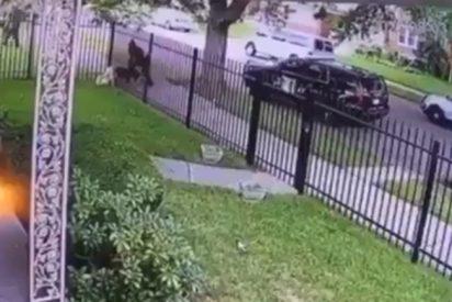 Un policía dispara a un perro que se encontraba detrás de una valla para salvar a un perro policía