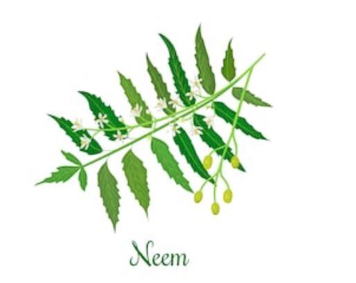 propiedades tiene el neem