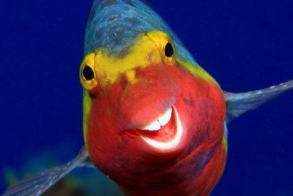 Te sacarán una sonrisa: estas son las fotos de animales más divertidas de 2020