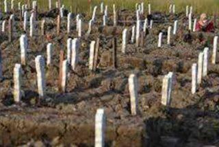 Los pillan sin mascarilla y los condenan a cavar tumbas para víctimas del COVID-19