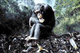 La diversidad animal de Europa se desvanecerá en un 30% por la pérdida de especies amenazadas