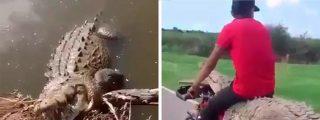 El caimán que viajaba en motocicleta
