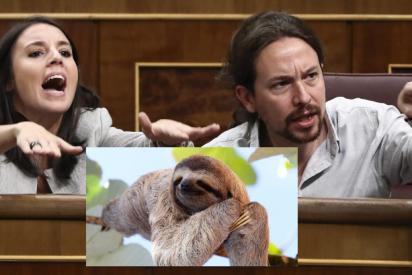 Frank Cuesta revienta Podemos: su vídeo 'colándose' en el casoplón de Galapagar con dos osos perezosos