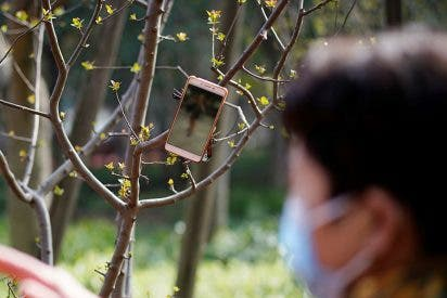 Repartidores de Amazon cuelgan sus móviles en los árboles para pillar más clientes