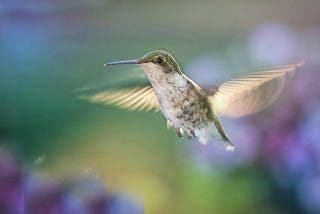 Las restricciones al ozono salvan en EEUU a 1.500 millones de aves
