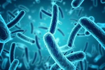 Una bacteria logra sobrevivir un año entero en el espacio
